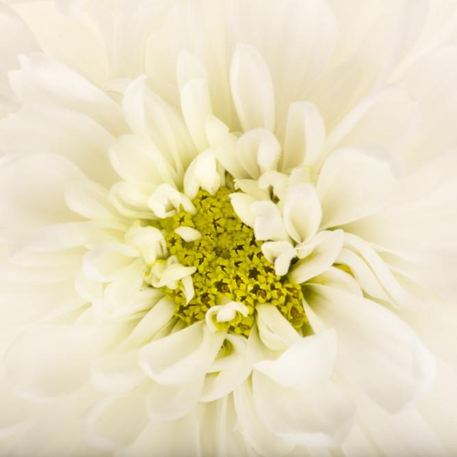 Flowers fine art color susan michal034 mjlm8g