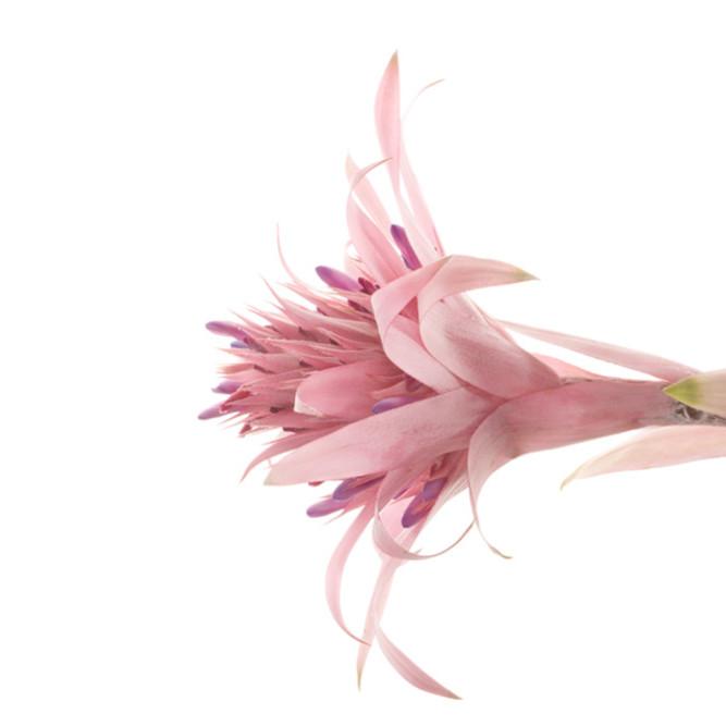 Flowers fine art color susan michal042 kweoyn