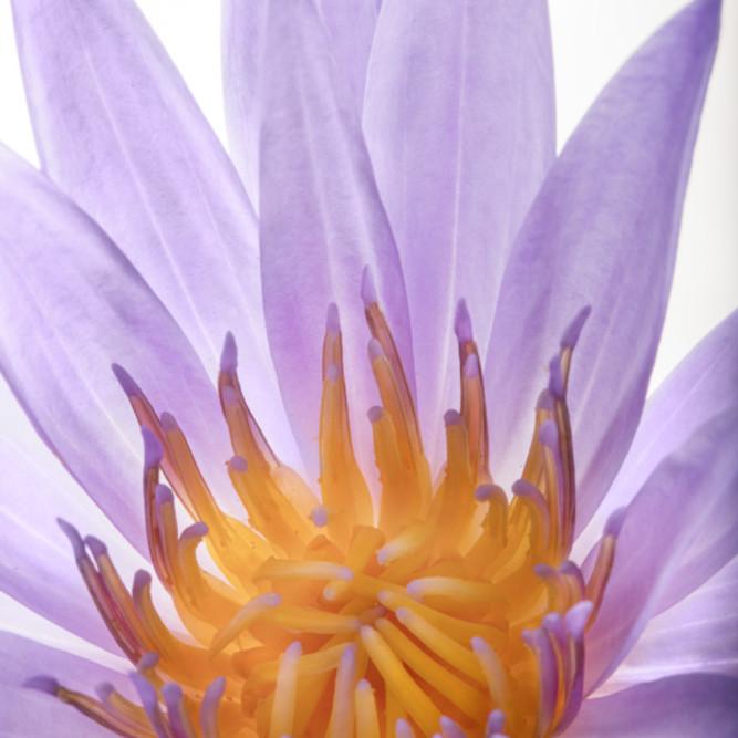 Flowers fine art color susan michal043 ldnpcx