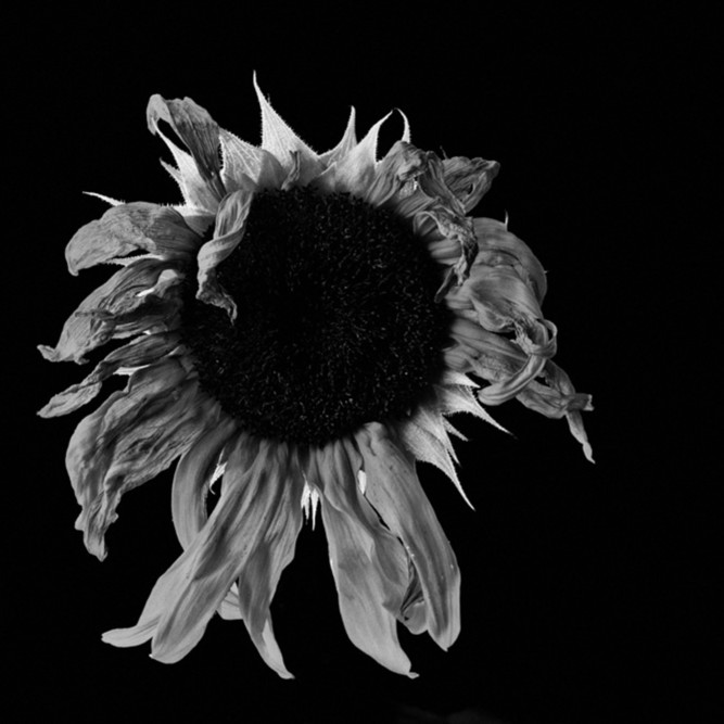 Flowers fine art black white susan michal070 elvod4