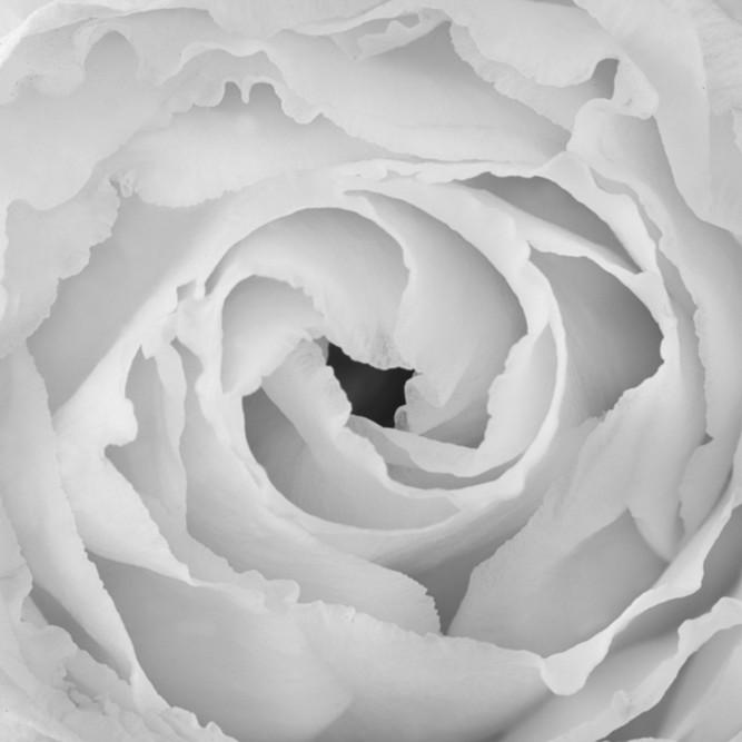 Flowers fine art black white susan michal058 iu5qhz