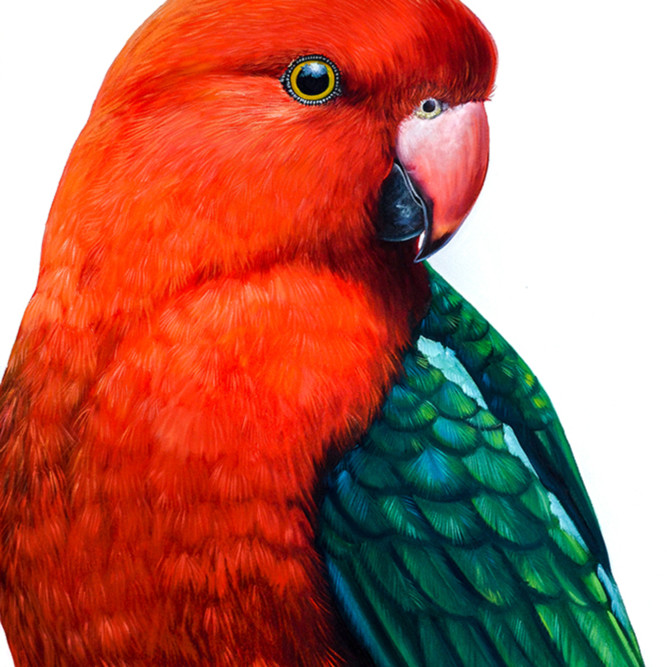 Geoffrey king parrot socialmedia hlsvlr