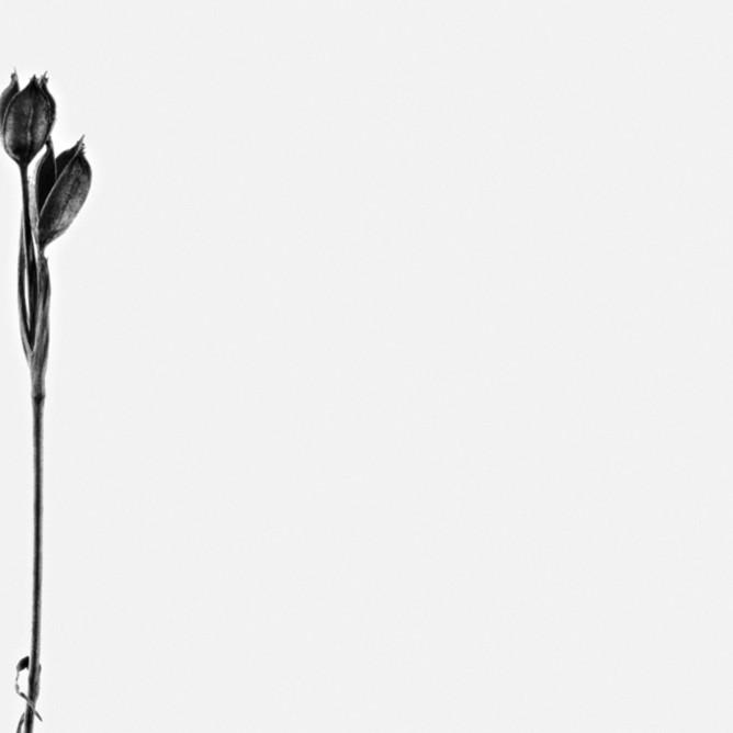 Flowers fine art black white susan michal068 gad5ek