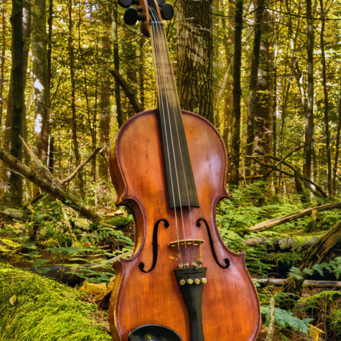 The woodland concertmaster qcnac8