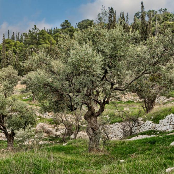 Robert a boyd mount of olives ynapvg