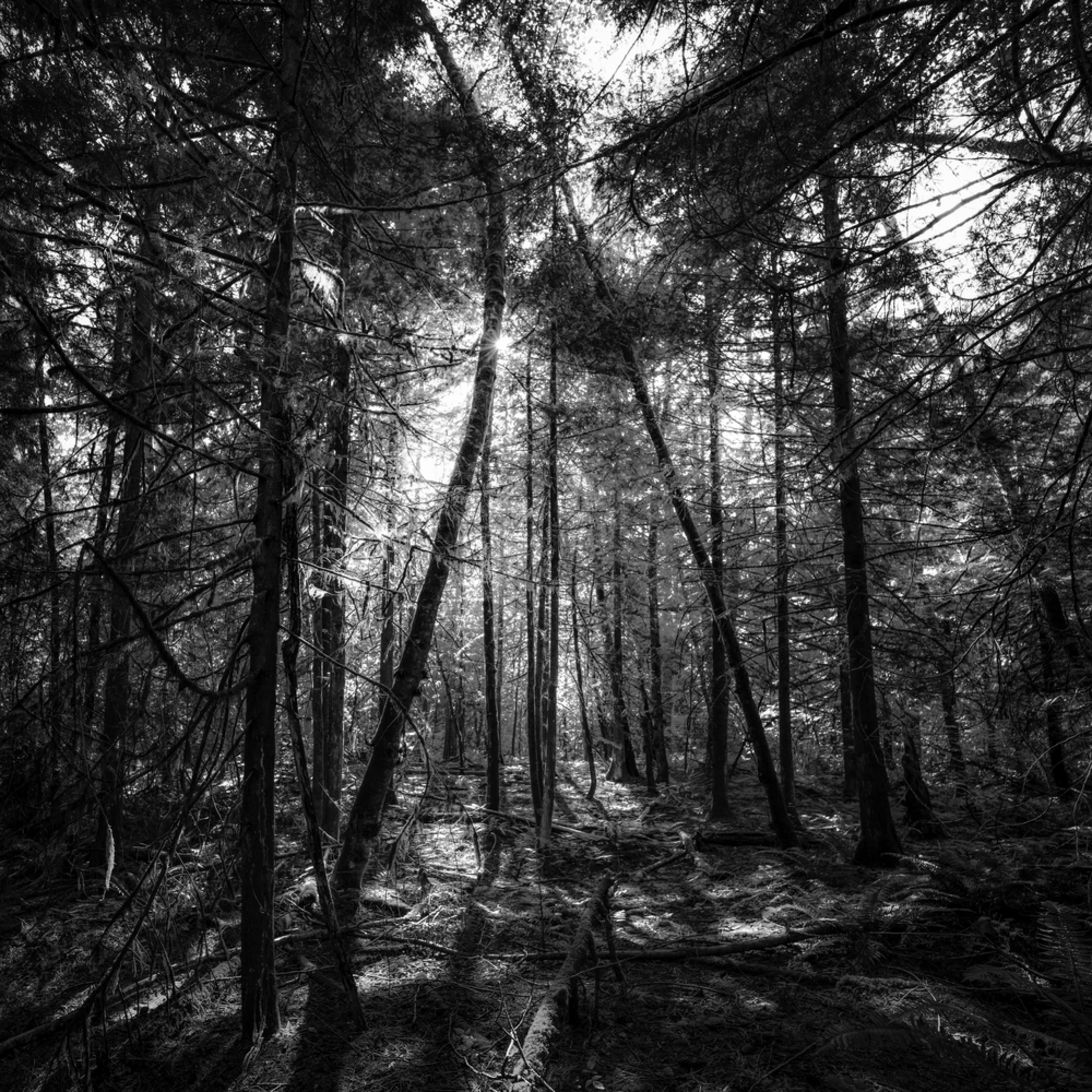 The shape of a forest ehiwsy