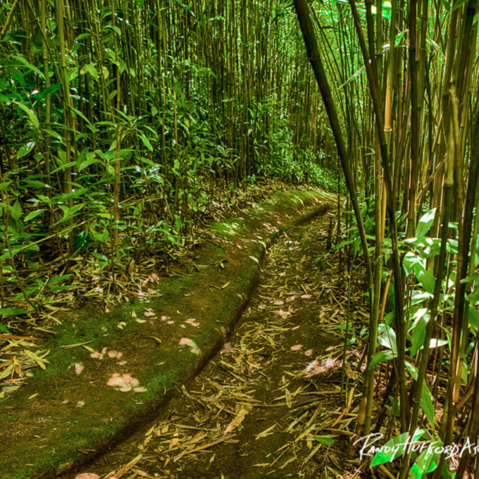 Brynne bamboo pathway zeowqc
