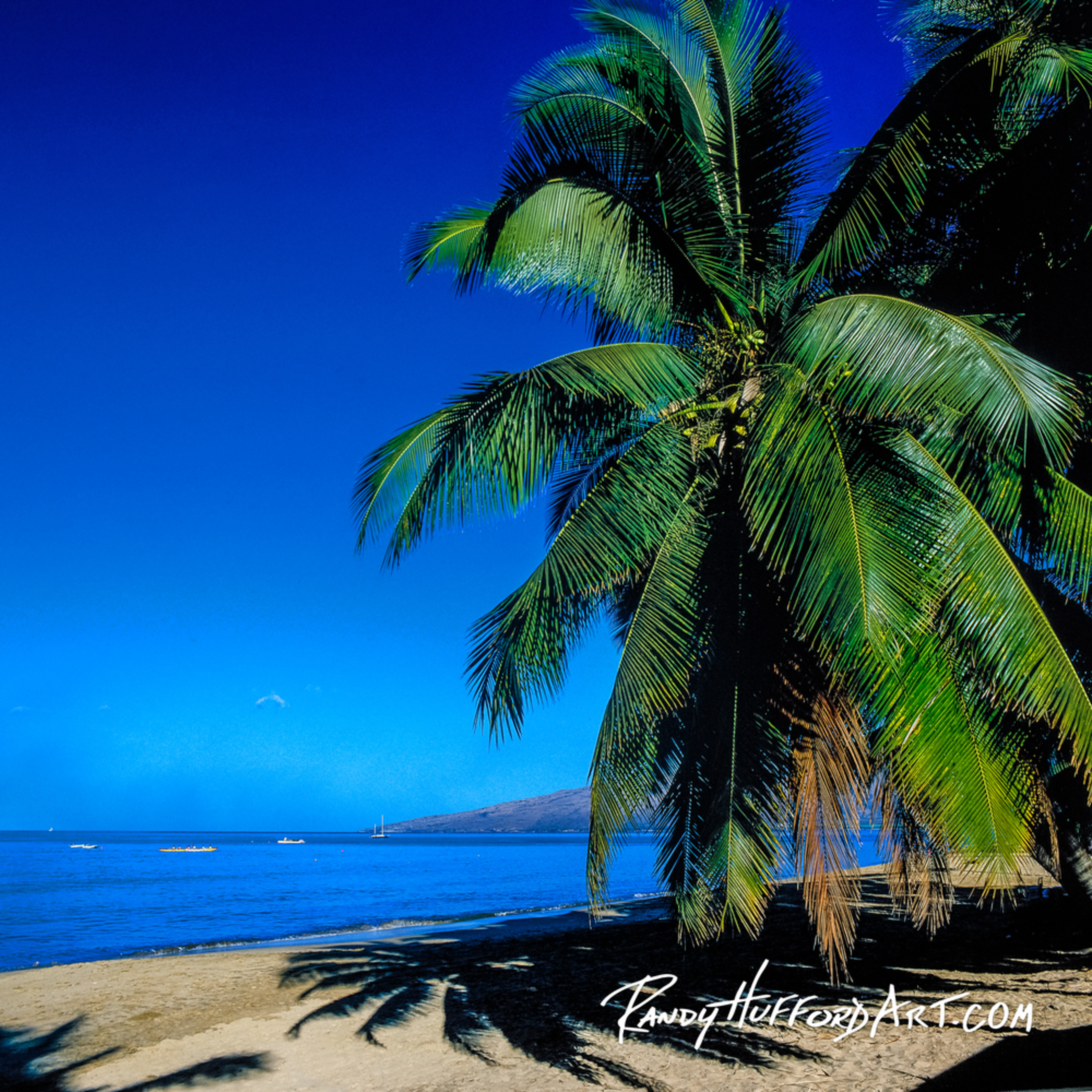 Beachpalm cv2 xw4lta