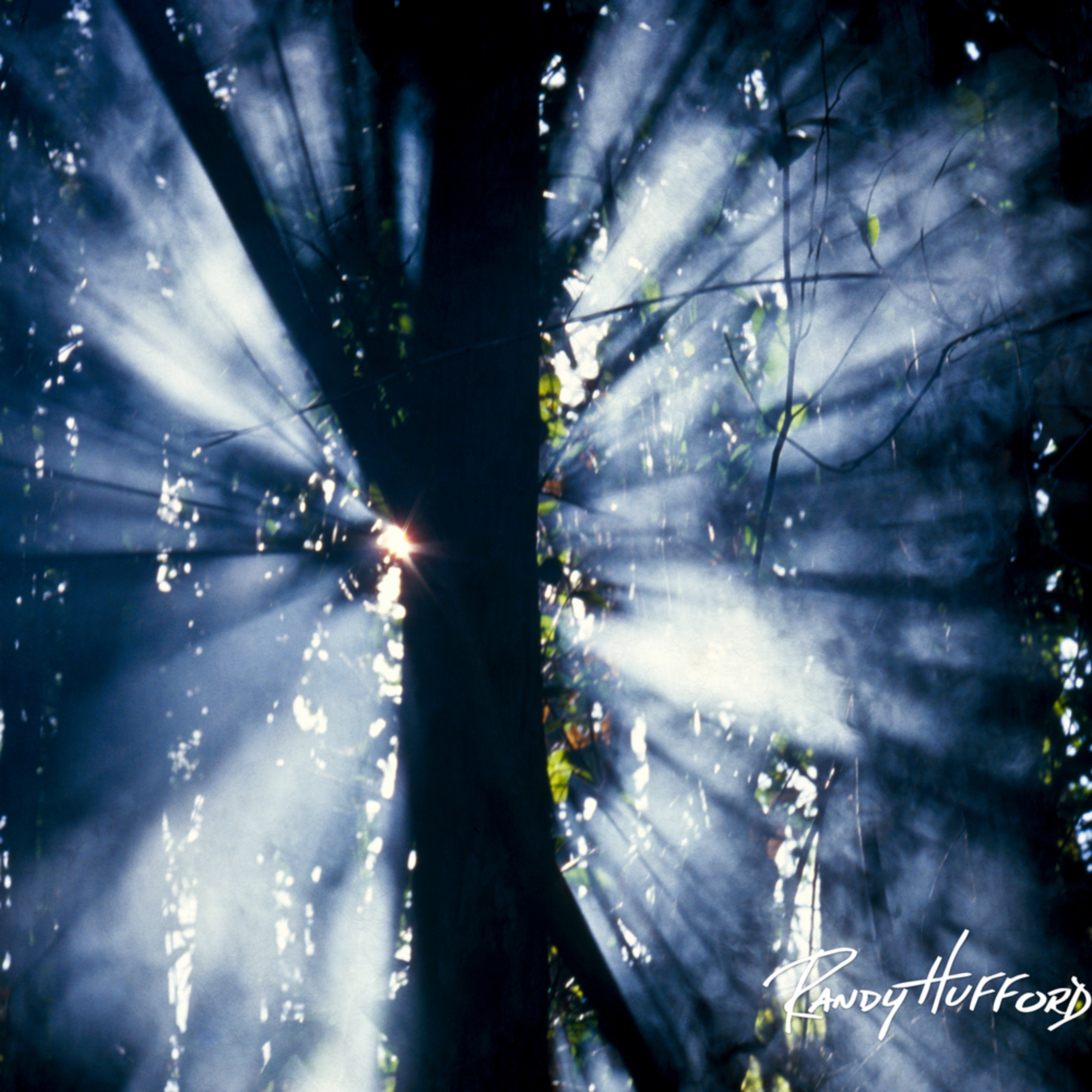 Forest rays ypuic9