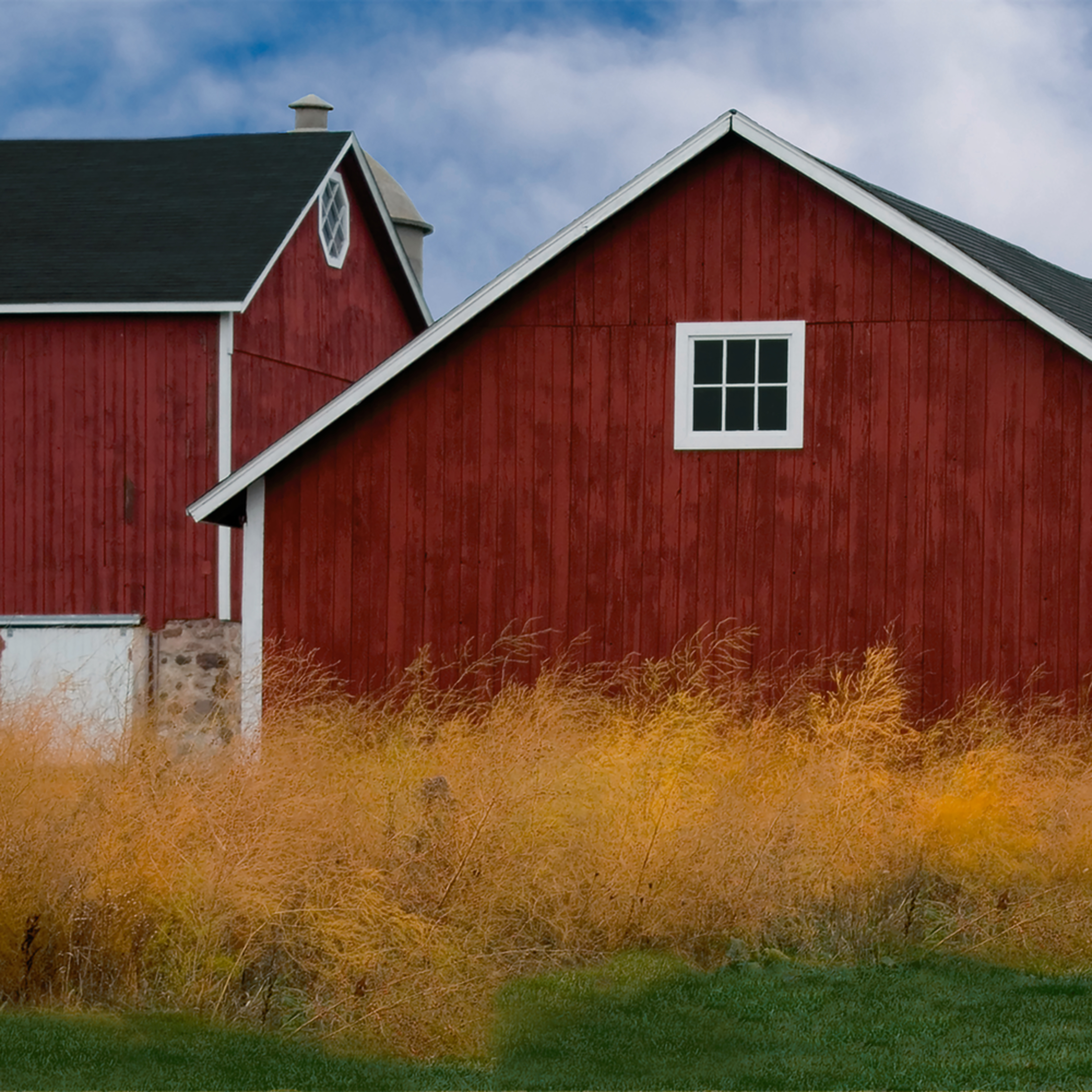 Yellow bushes on a red barn day final pgwj1v
