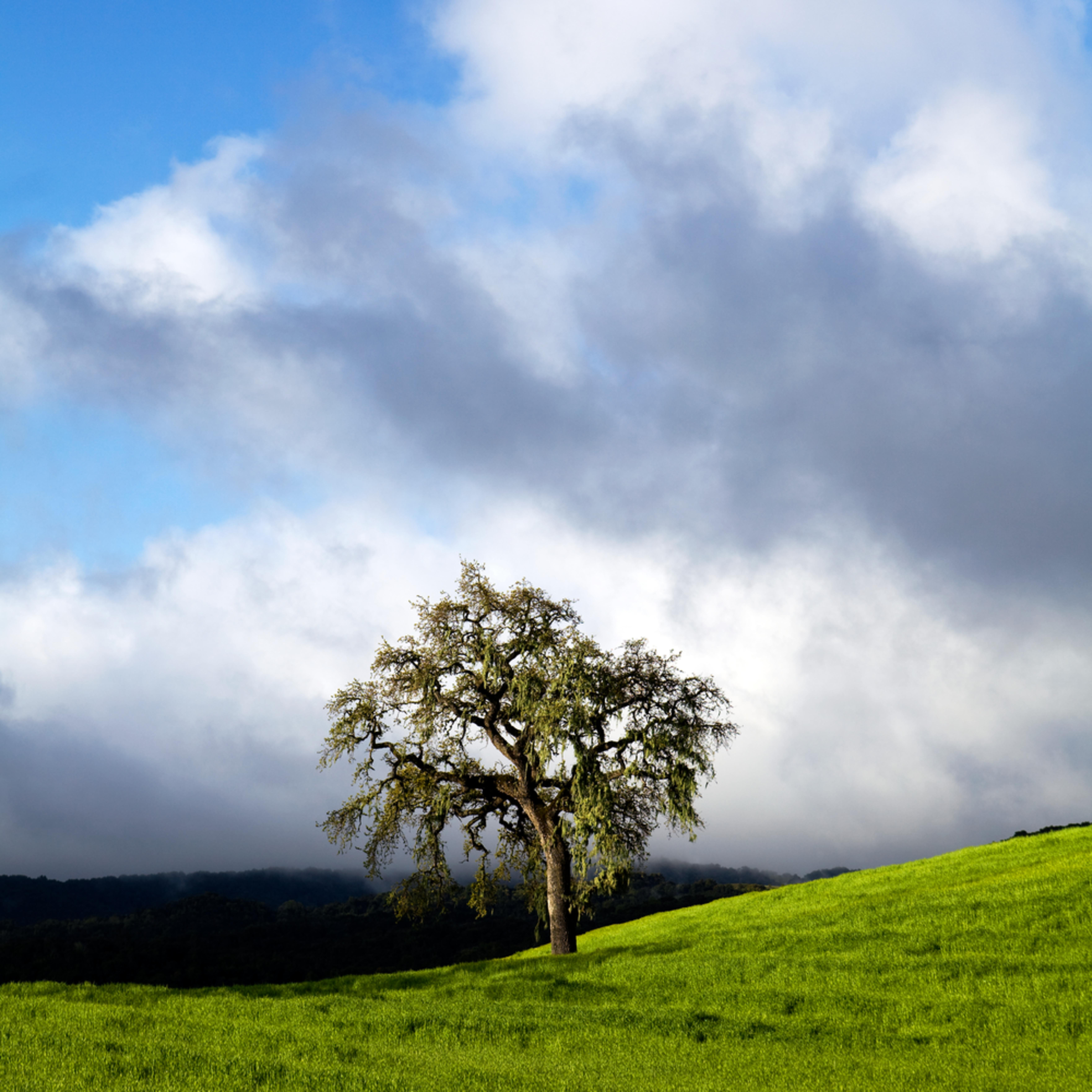 Spring oak dfn1az