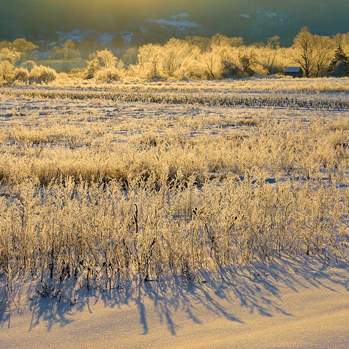 Morning frost qwnzrn