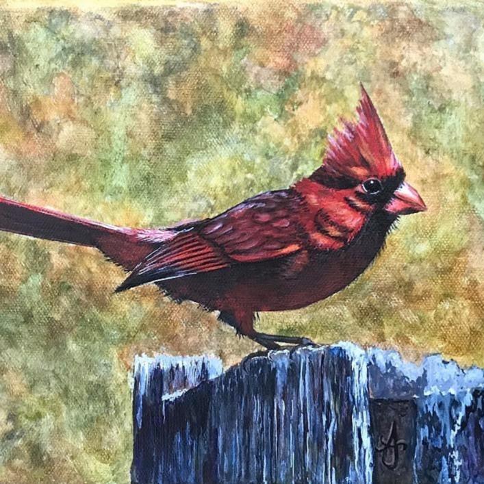 Little red bird zf6zml