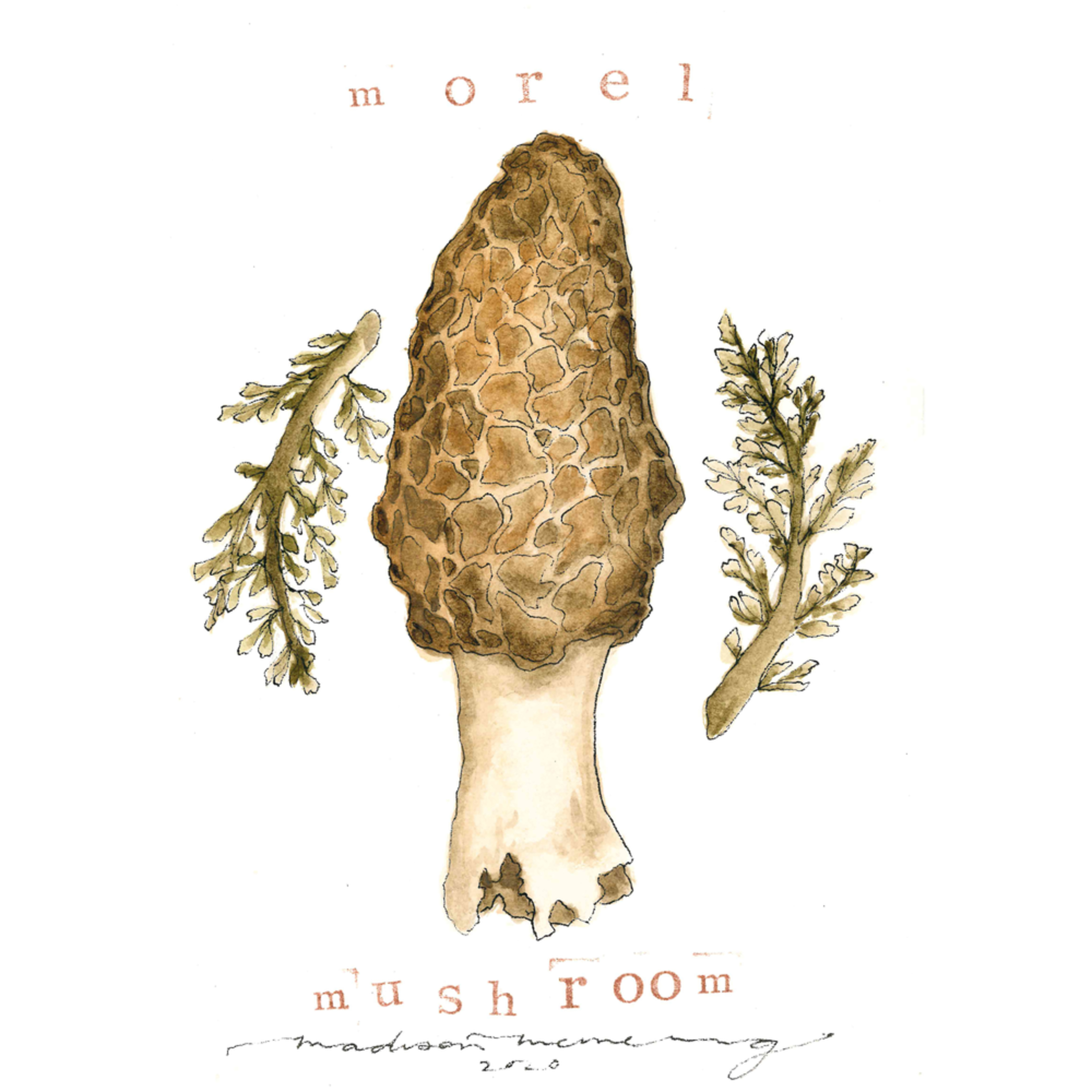 Morel mushroom copy osynkn