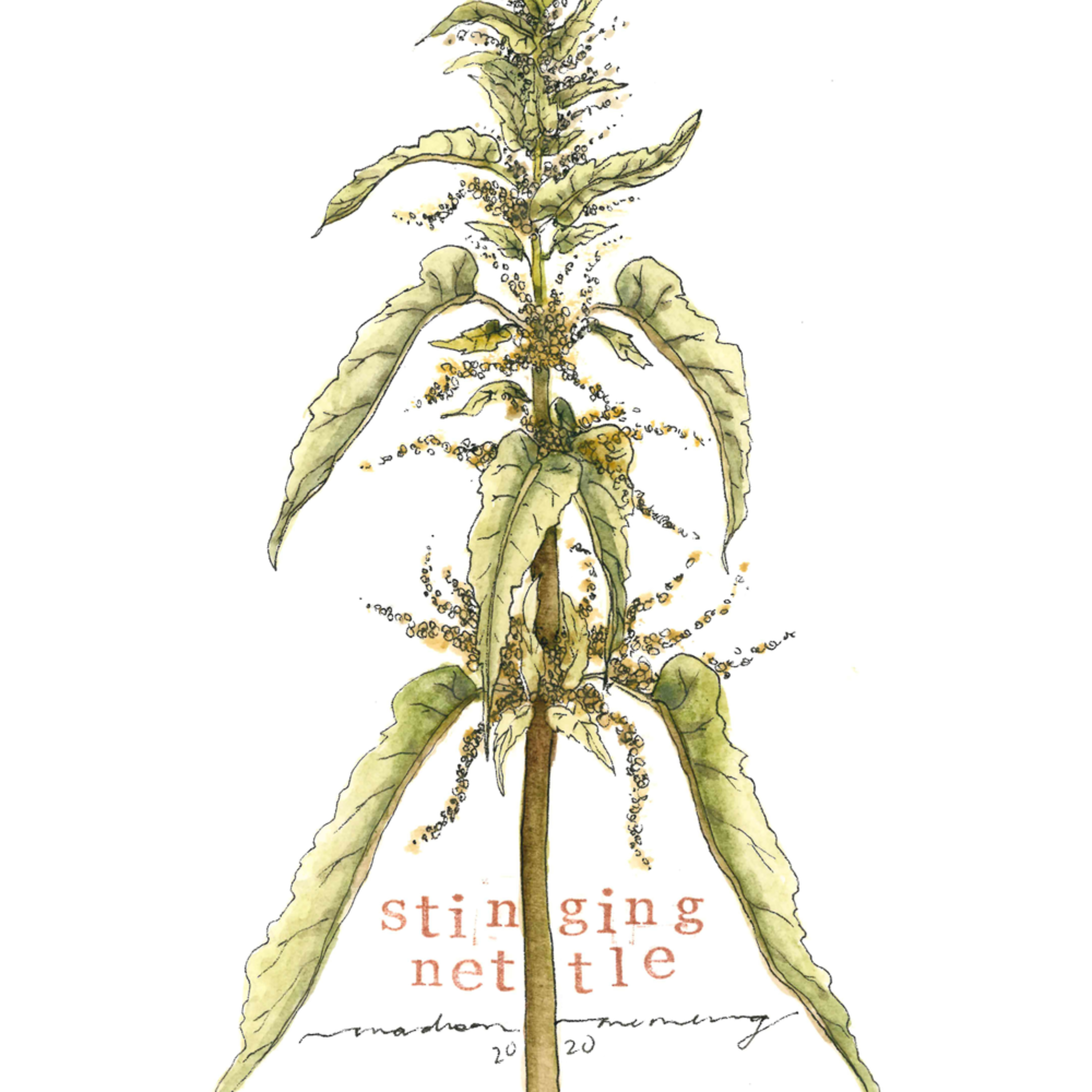 Stinging nettle by madison memering sized at 8x10 copy fuuscg