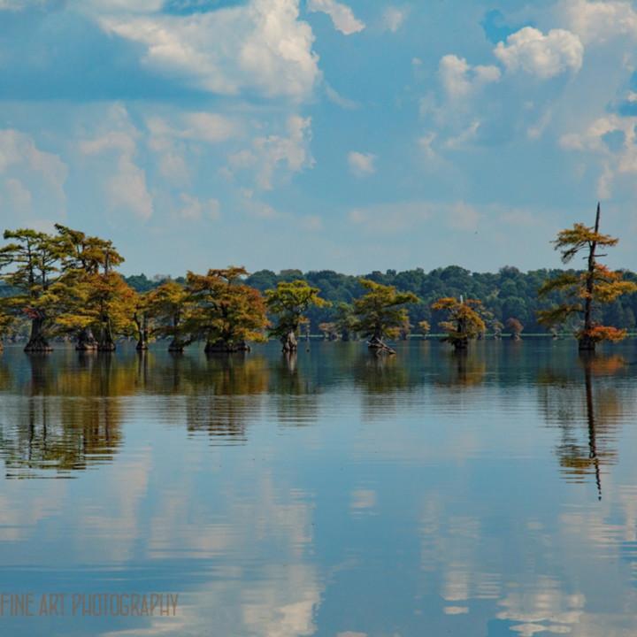 Cypress trees lake reflection 9448 c rfl0 koral martin p6zrt1