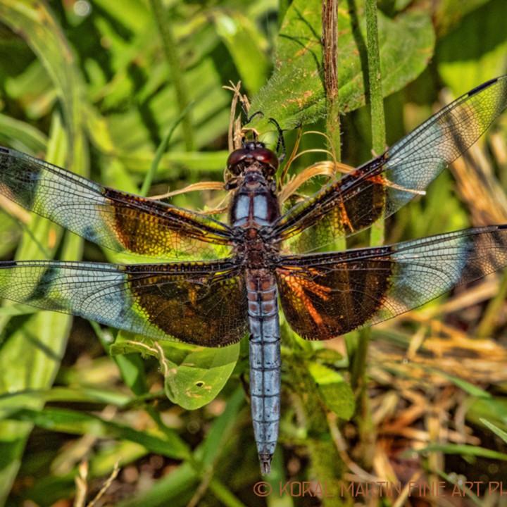 Dragonfly eating leaves 1428 n2sqfp