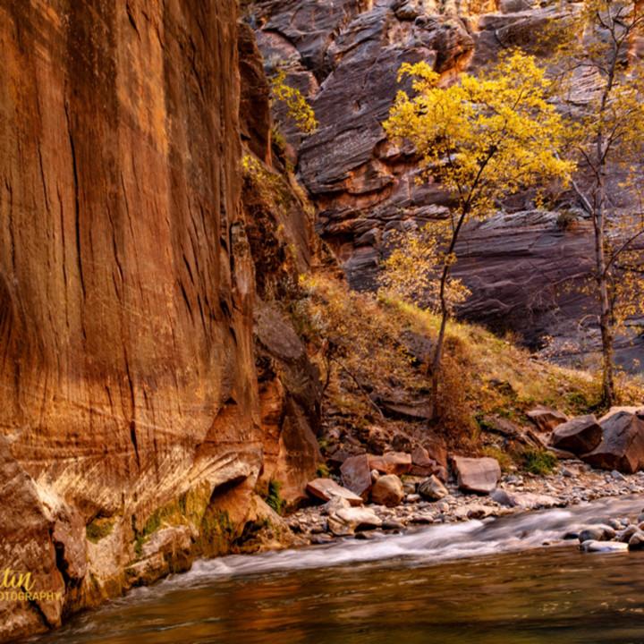 Narrows fall tree 2826 koral martin ainxy4