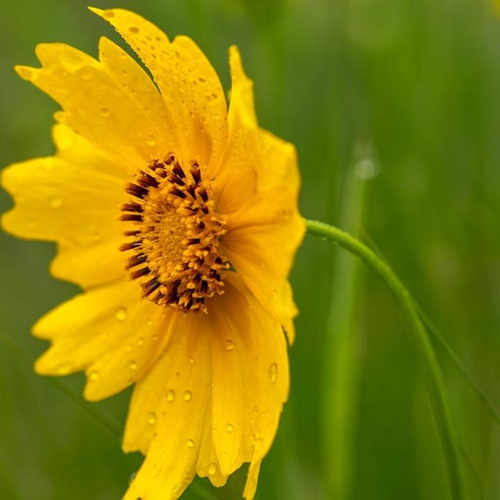 Yellow daisy wildflower side5680 koral martin fhllep