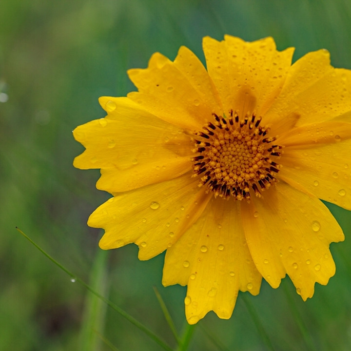 Yellow daisy wildflower5665 koral martin iuuhpd