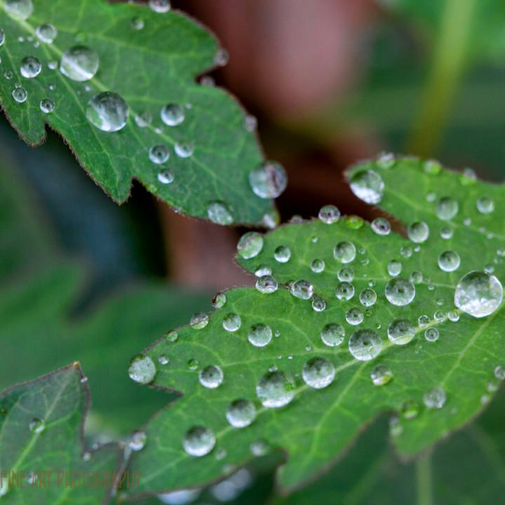 Leaves raindrops 9121 devils den koral martin py48e0