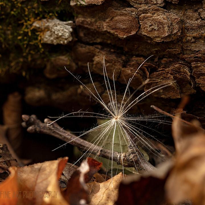Seed pod 0653 koral martin dvmfvh