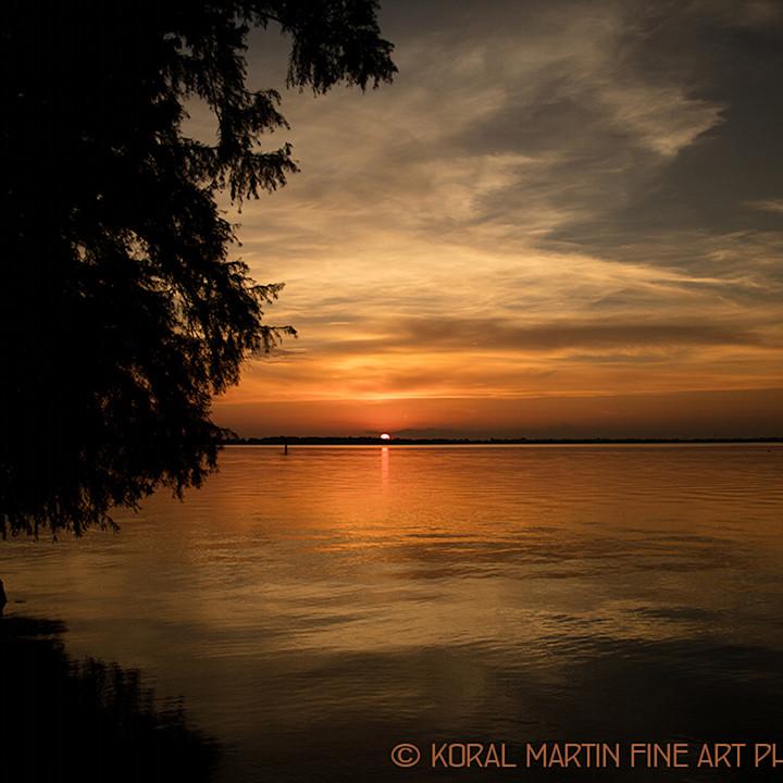 Sunsetreelfoot1291 lf koralmartin o9r53s