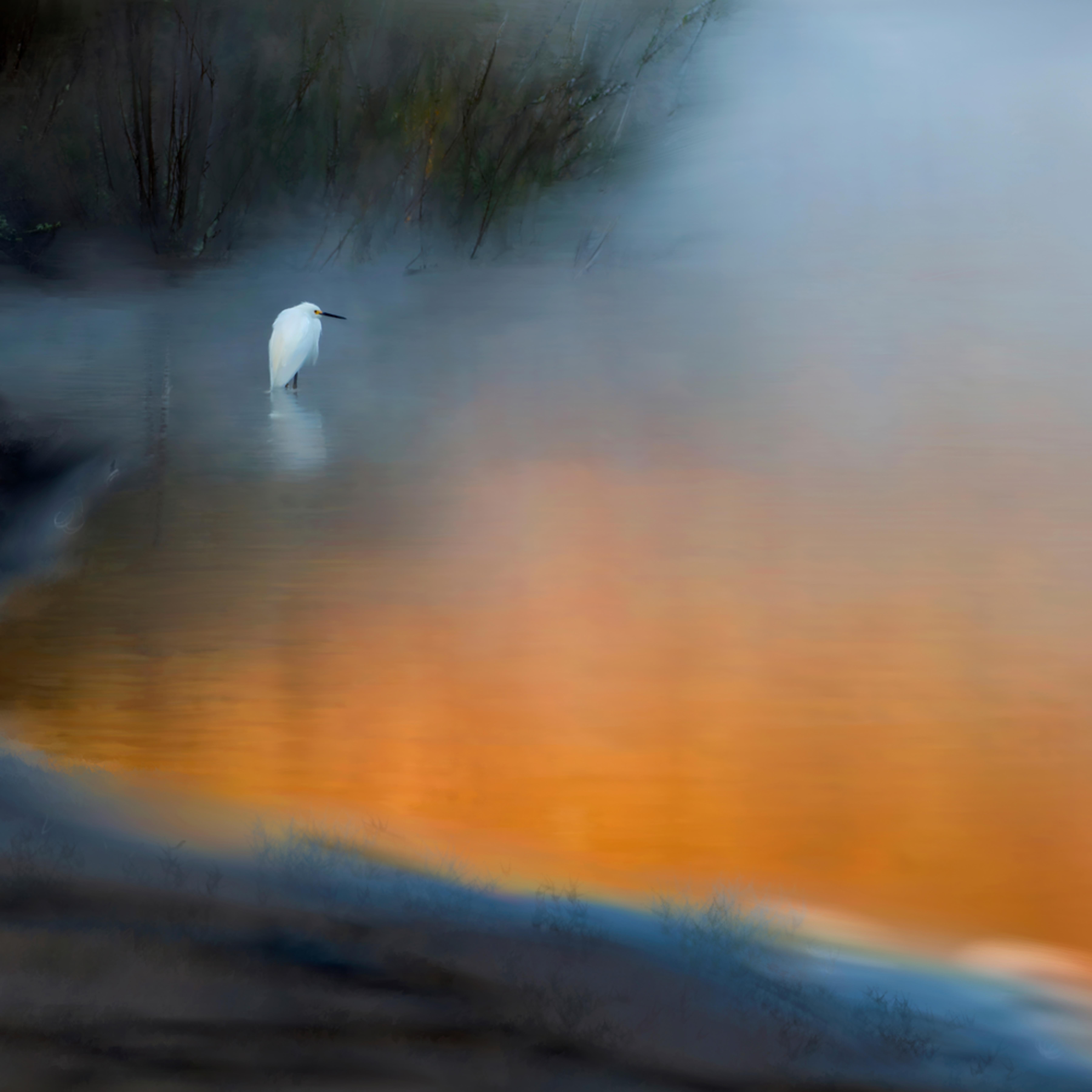 Egret on foggy lake oft867