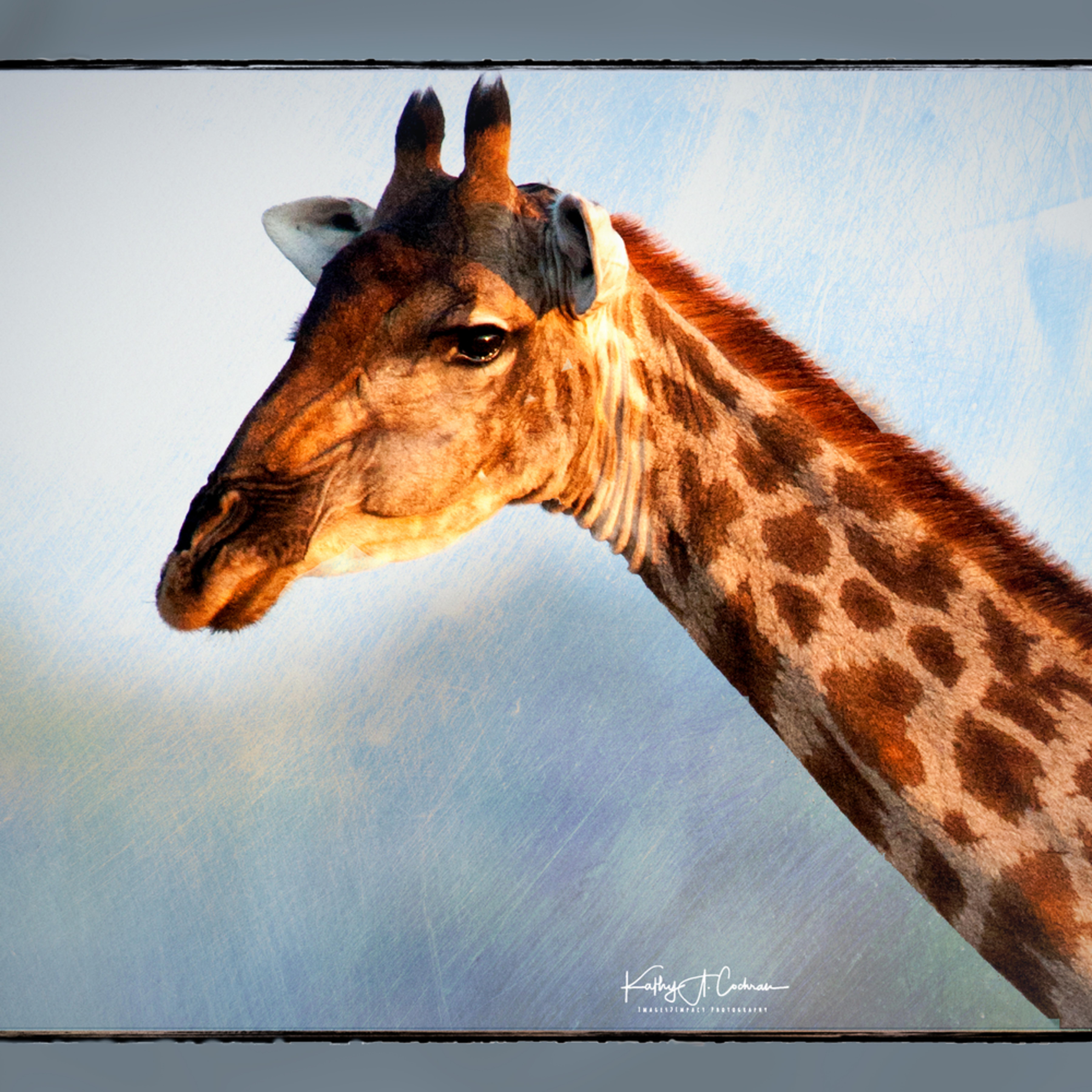Giraffe on blue w0p9us