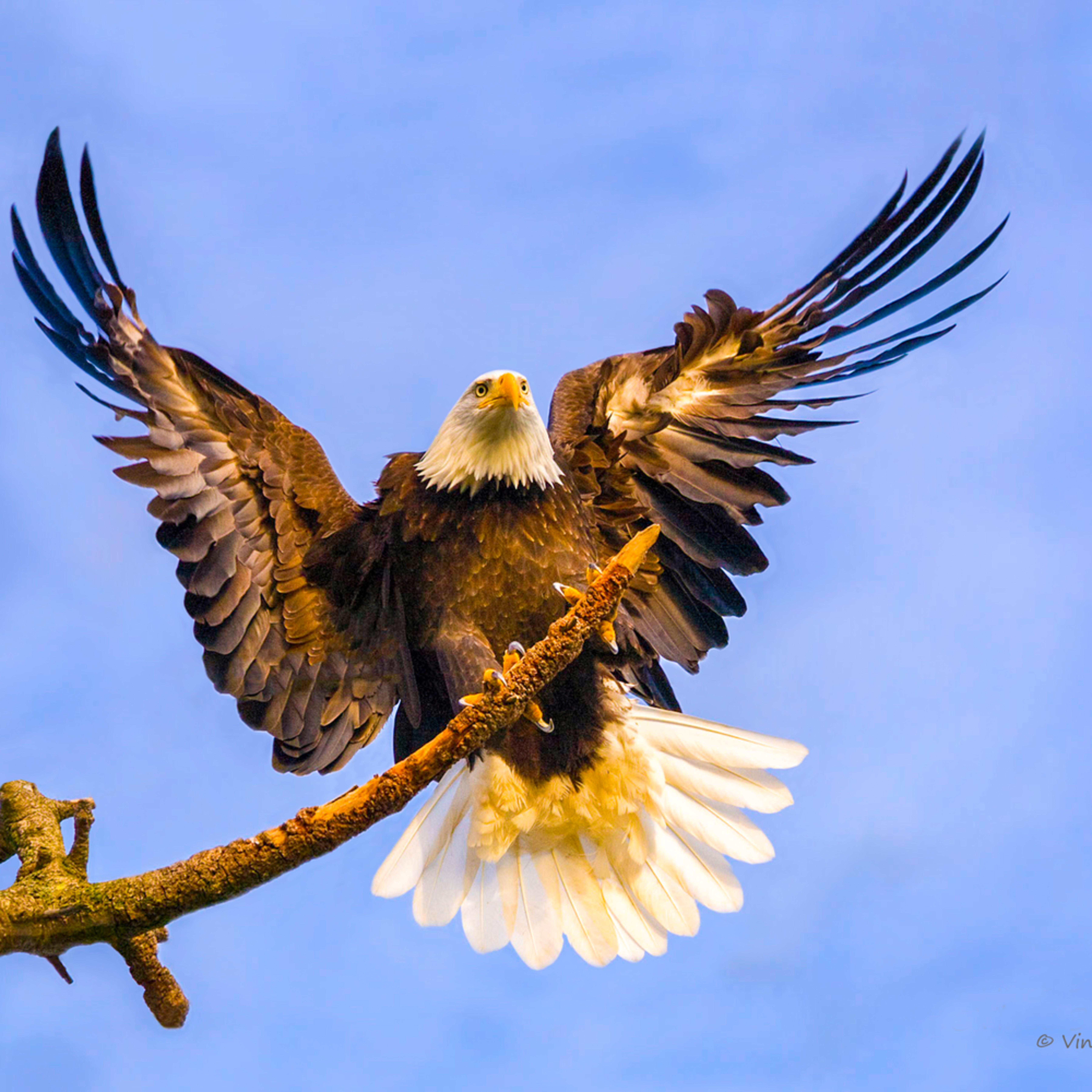 Eagle landing asf final u9bkpq