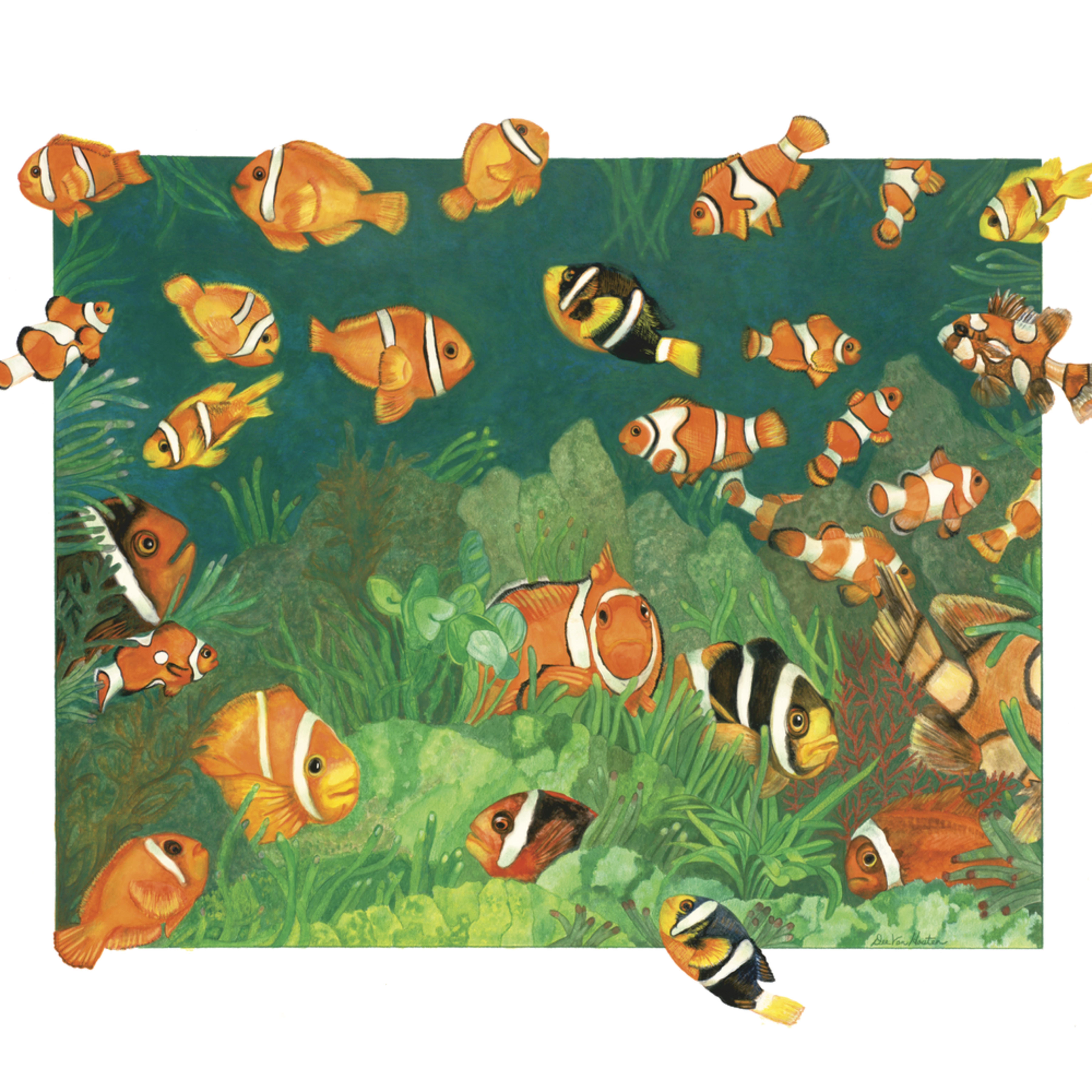 Dee van houten clownfish watercolor m2evid