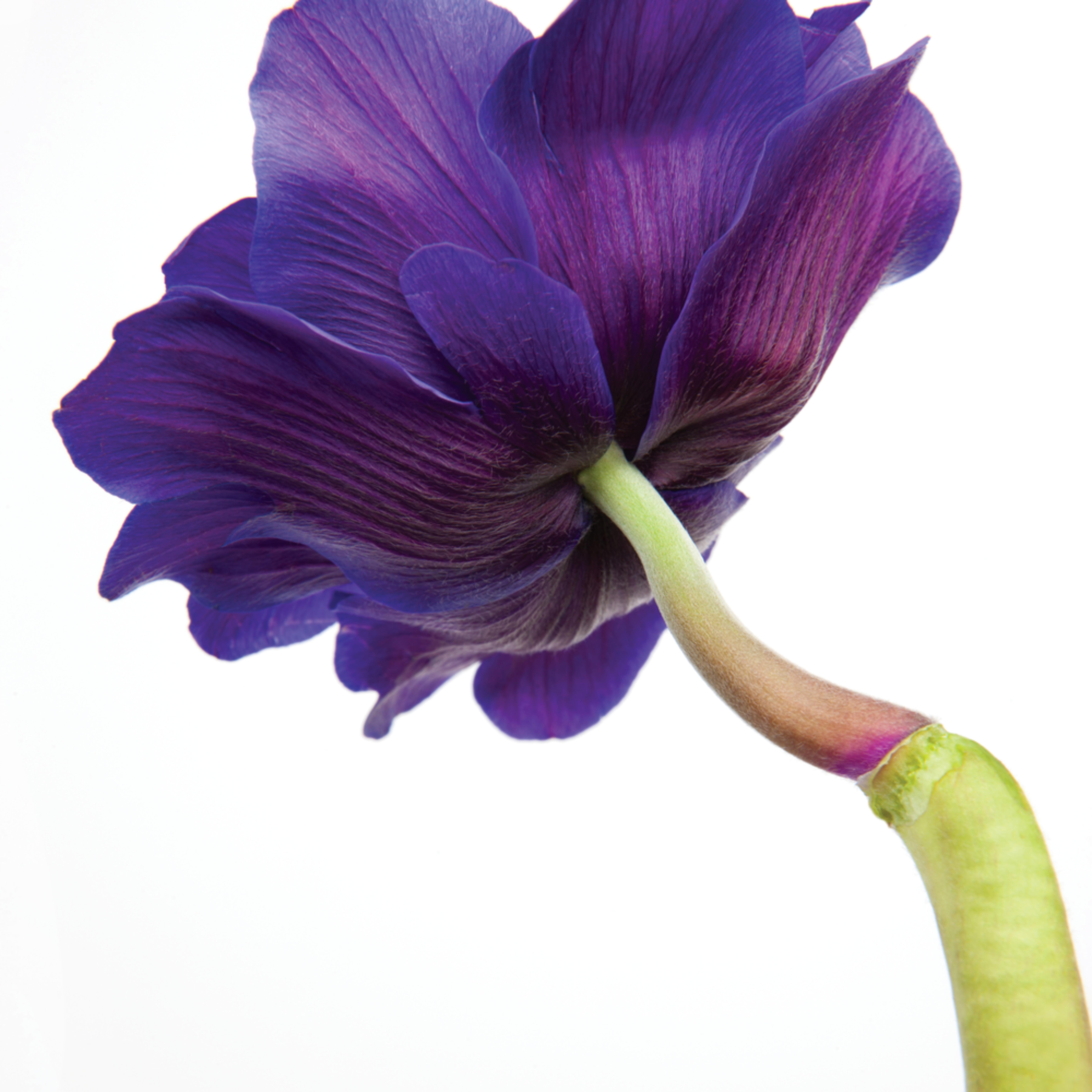 Flowers 422 5mmm zijbgm