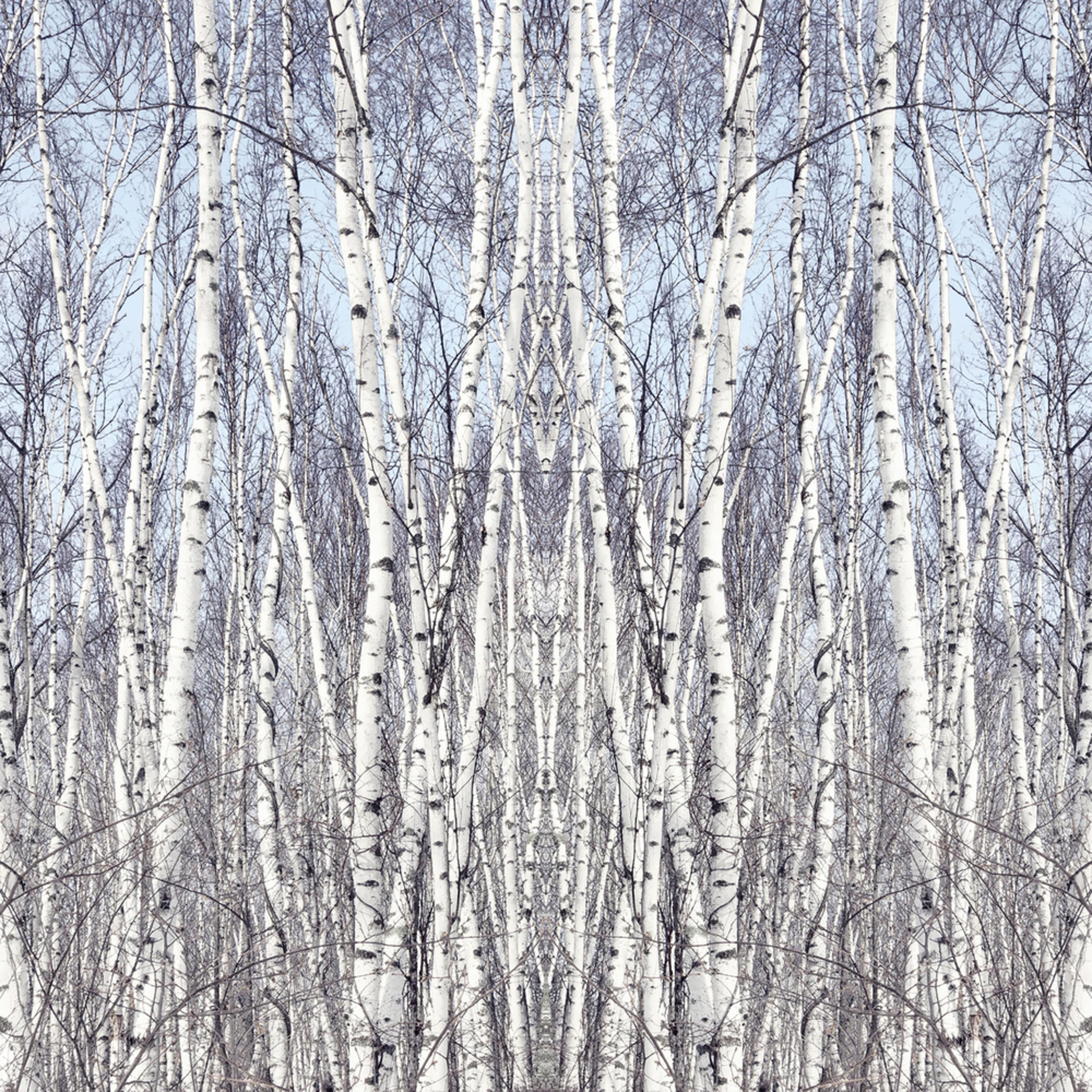 Birch zen asf 24x48  vajctv