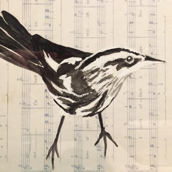 Songbird crop zs0x3z