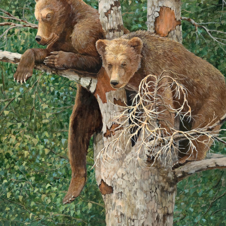 Cubs in tree lores clorwr