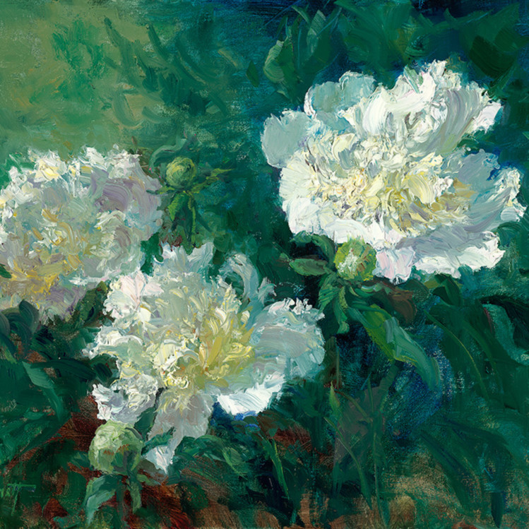 Peonies in the morning w7or8b