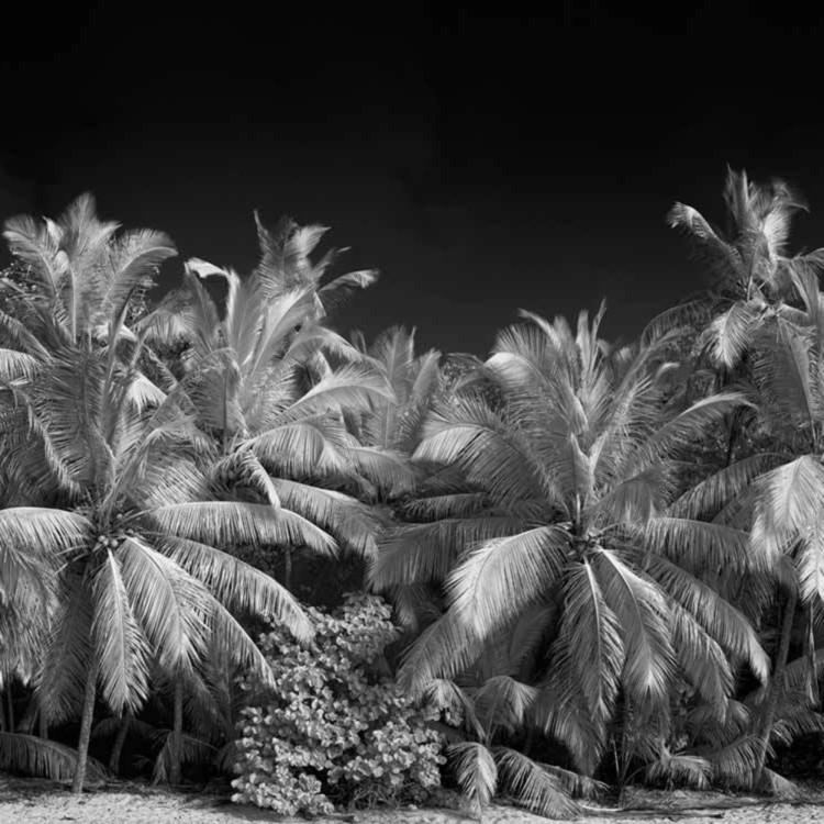 Gibeny beach ir pano iyvykm