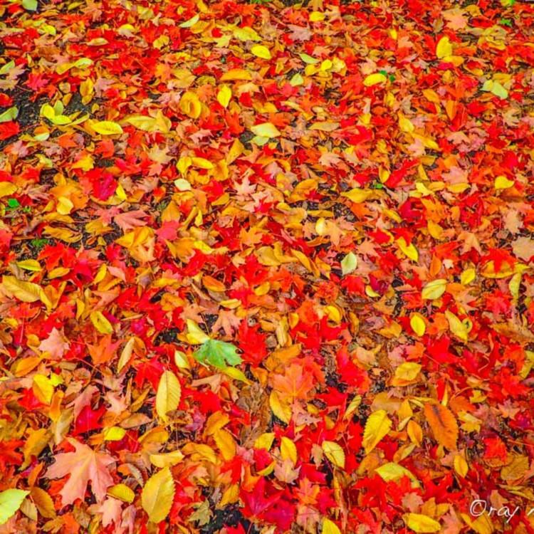 Autumn carpet ozmvaf