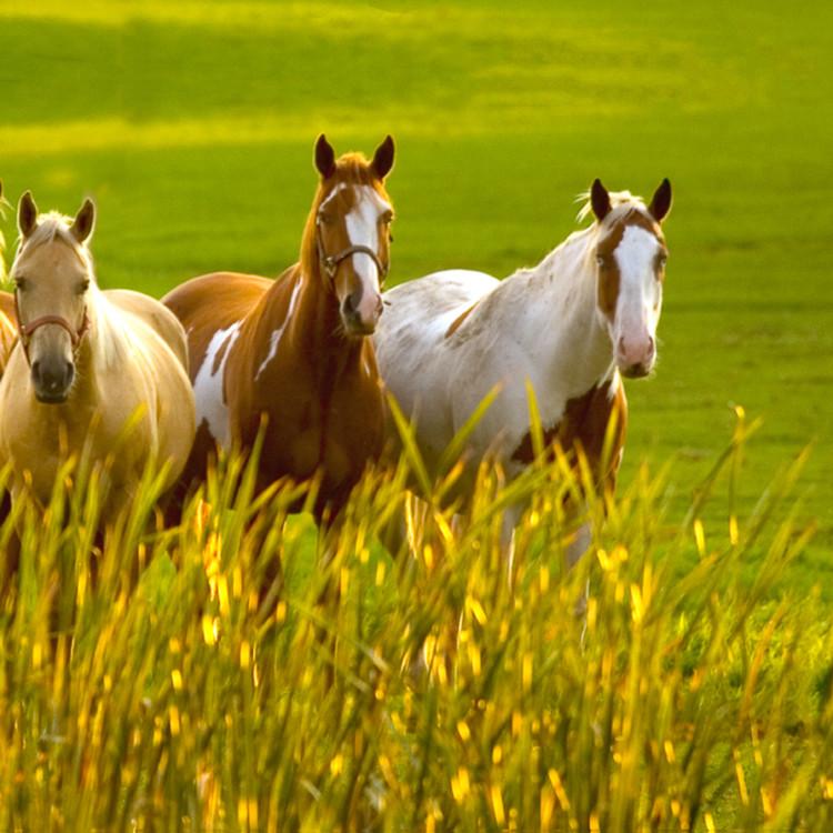 Greener pastures pano mg1899  jdsqap