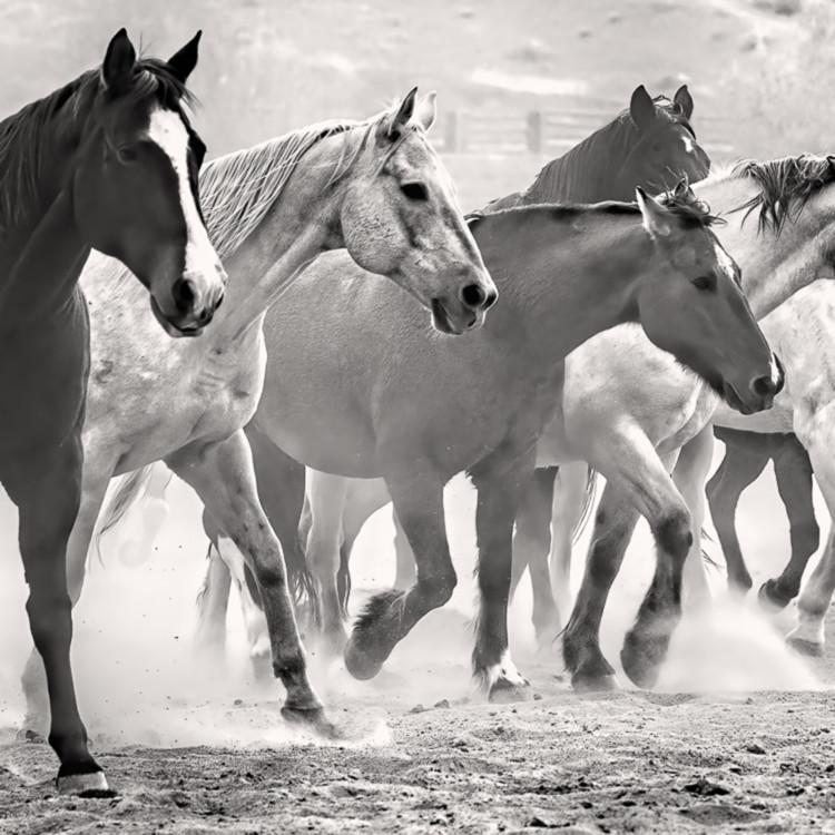 Horse  z7q1366  quwqcl