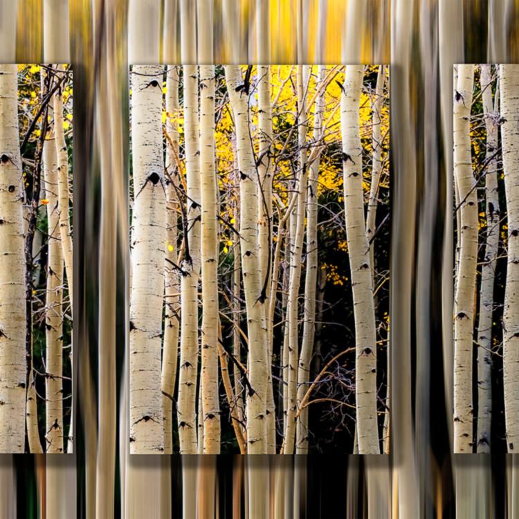 Aspen trunks fall lines 3 pc 3d uvxadk