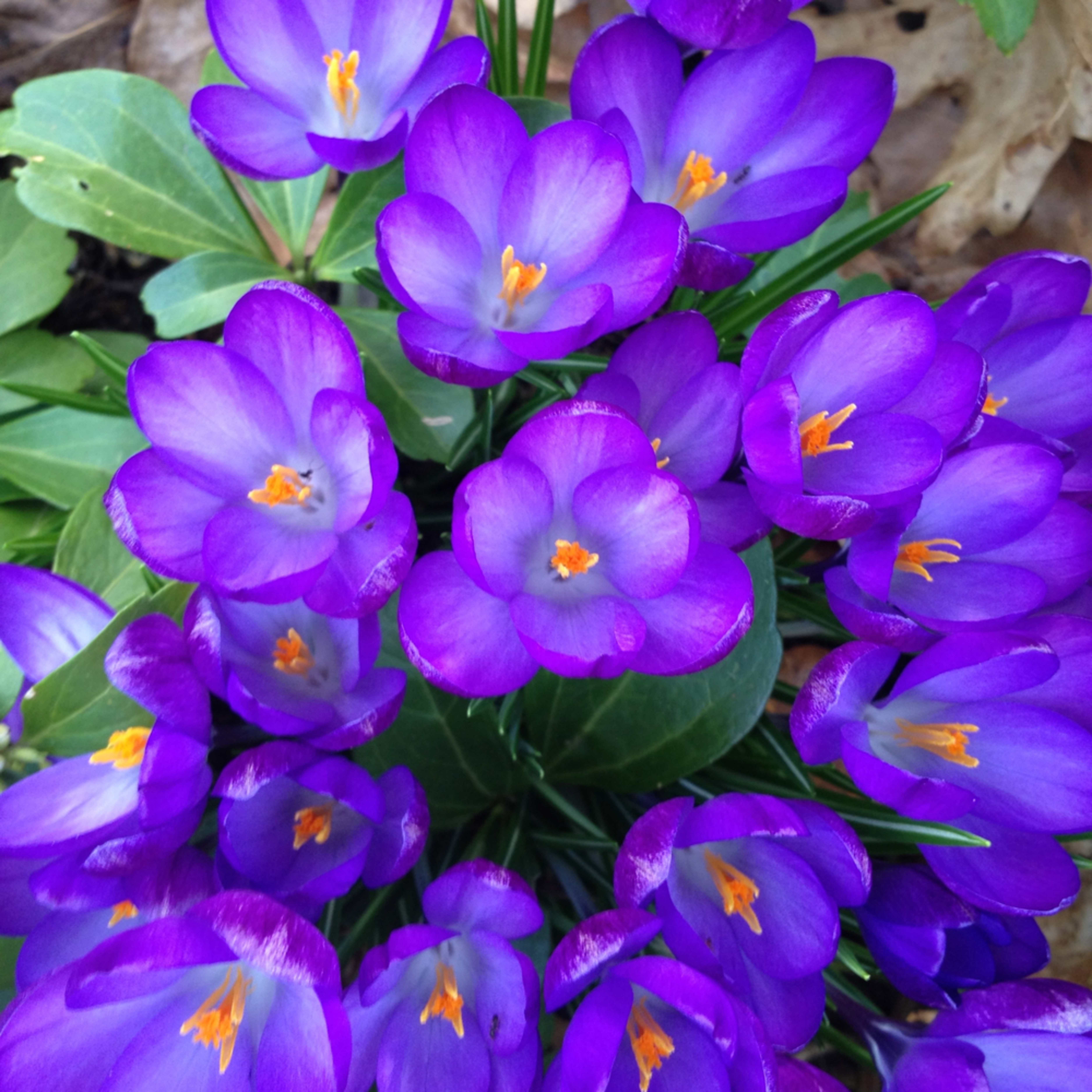 Purple bouquet blwmmd