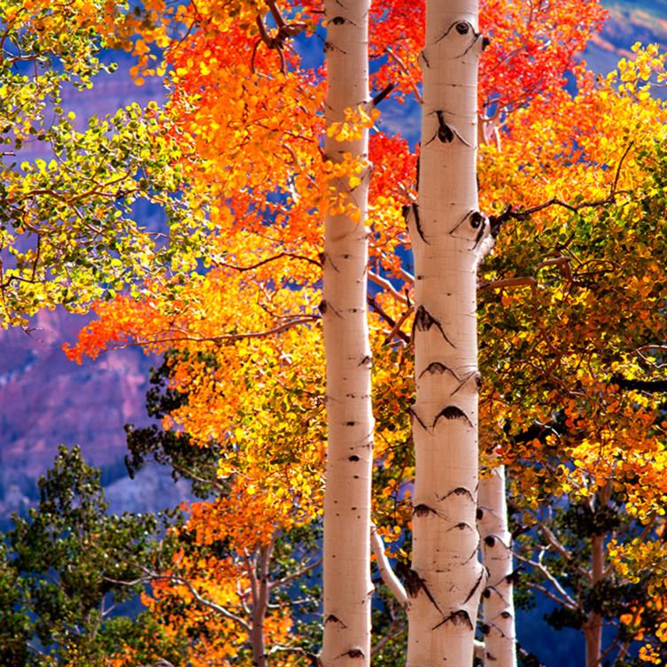 Autumn sentinals pcappb