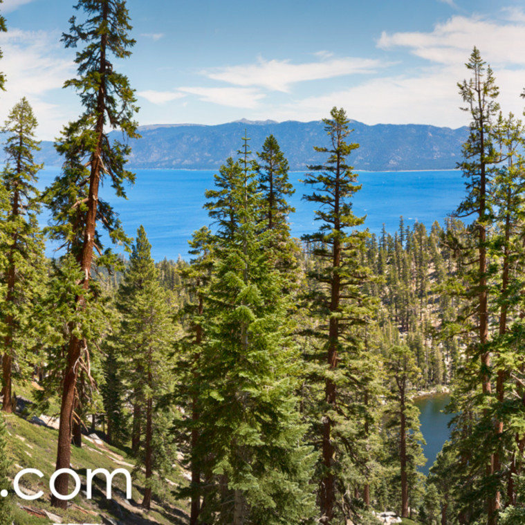 Tahoe forest panorama qe8xln