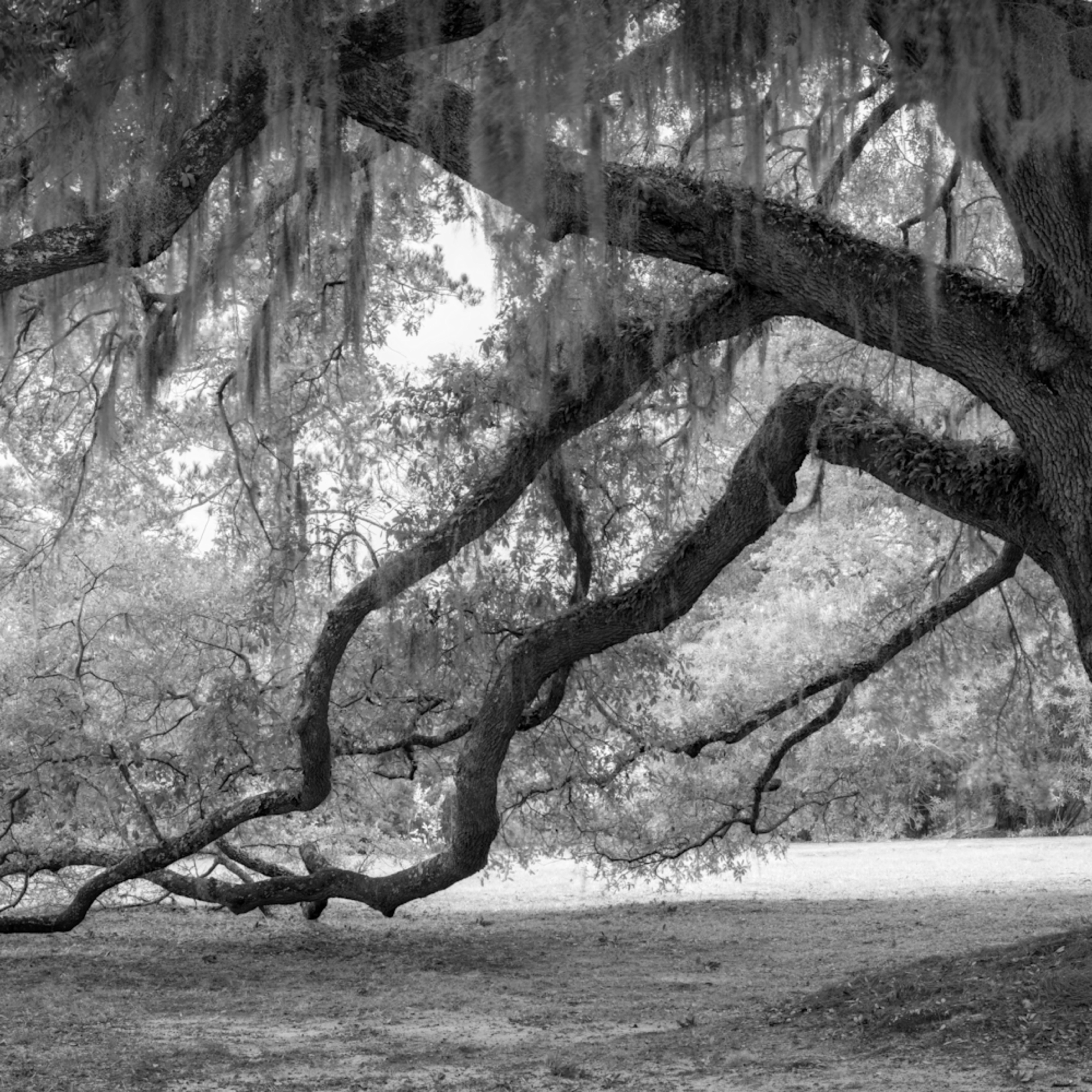 Fowler oaks 20201217 0261 hdr pano wxyiel