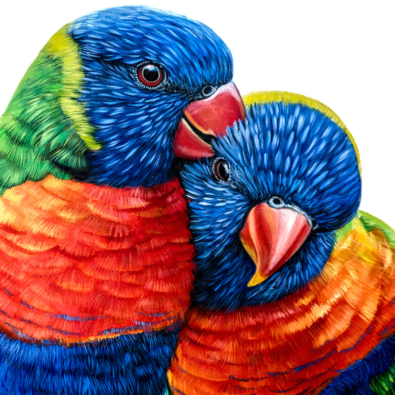 Jeff and jenny   rainbow lorikeets fuecbk