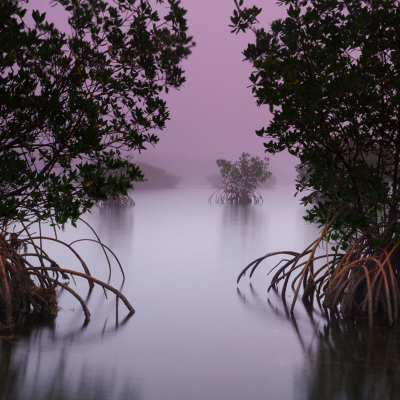 Mangrove opening ebuede