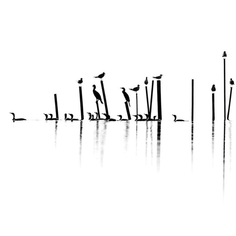 Gulls and cormorants 1 je2ijr