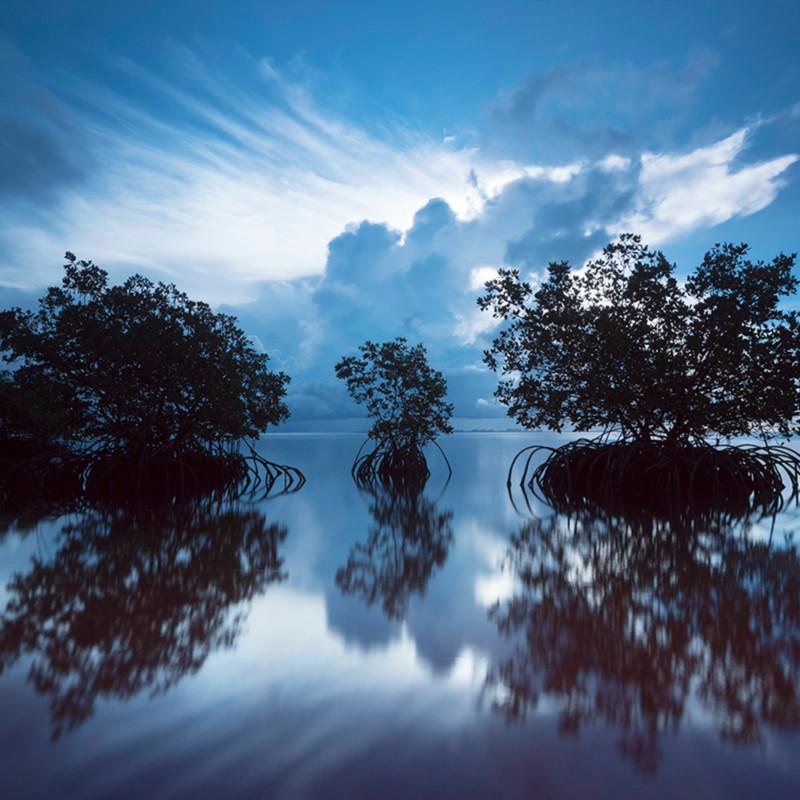 Mangrove blue 1 xfv36q