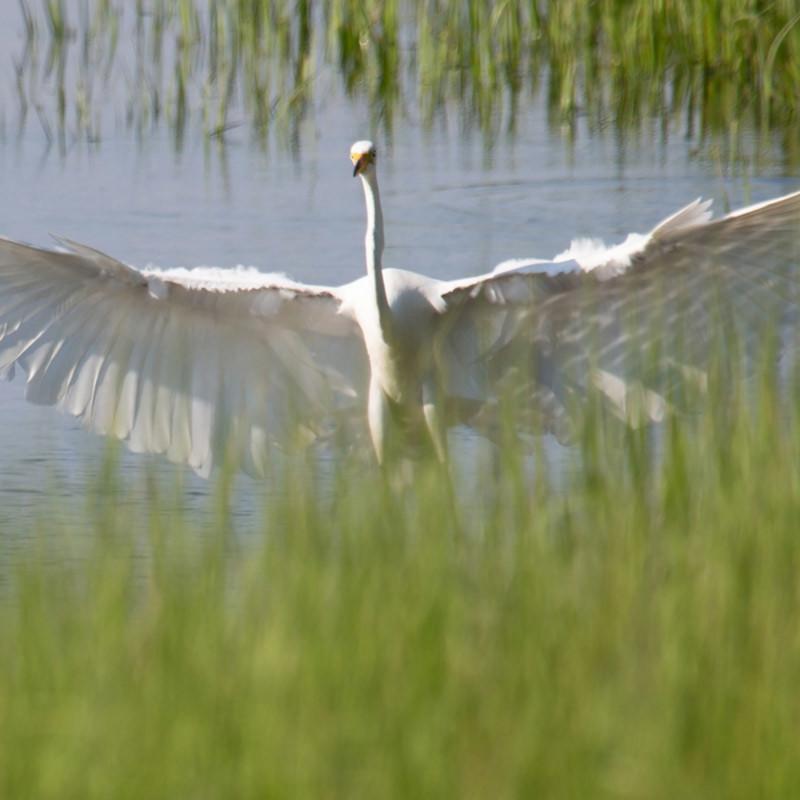 Egret spirit x1cknj